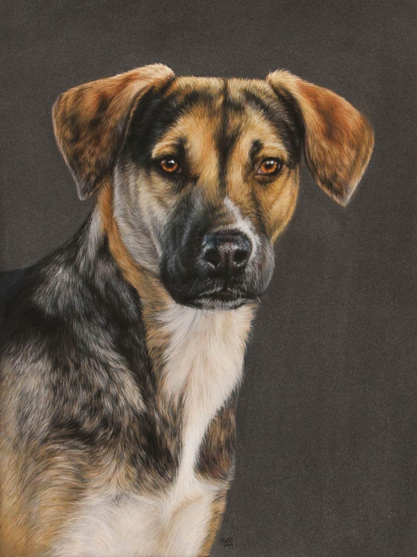 Pastel tegning af hunden Clara