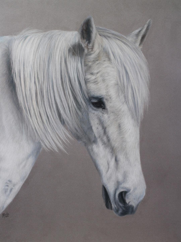 Tegning af hesten Silver